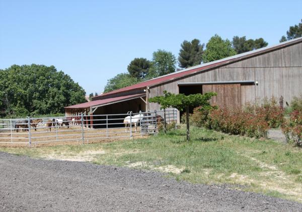 Manège et le parc des poneys
